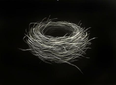 Sparrow Nest III