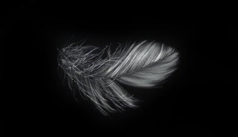Feather III incised painted aluminum