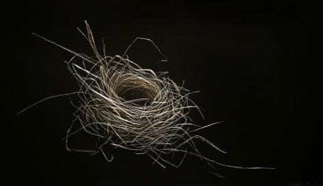 Cardinal Nest, Summer 2015