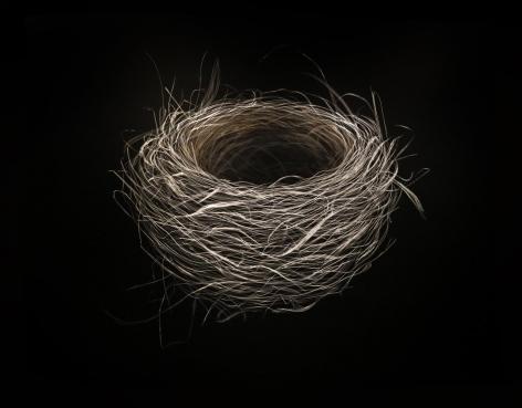 Nest, Summer 2017