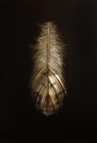 Grouse Feather II