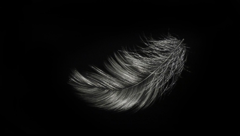 Feather VI incised painted aluminum