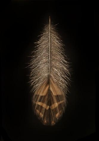 Grouse Feather II, 2016