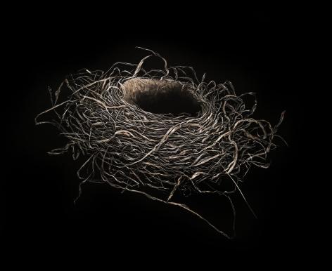 Mitchell Lonas Robin Nest, Winter 2020, 2021