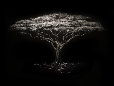 Acacia Tree incised painted aluminum
