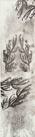 Seaweed Pattern intaglio printed collagraph