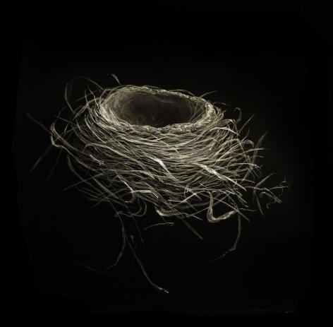 Robin Nest IV