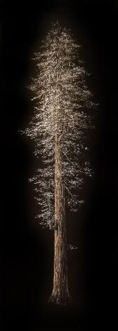 Redwood incised painted aluminum