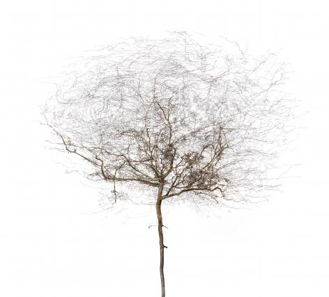 Bertrand Flachot Arborescence XIV, 2019