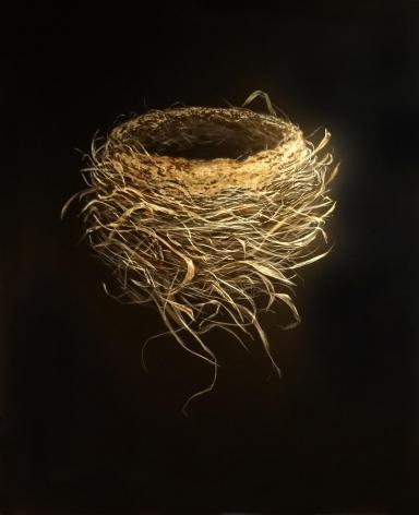 Spring Robin Nest 2014