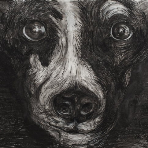 Charcoal on paper drawing closeup of a dog's face by Laurie Anderson