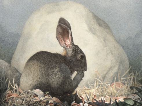 SUSAN MCDONNELL, Marsh Hare, 2019