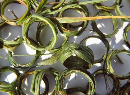 Grass Rings by Kay Eppi Nölke