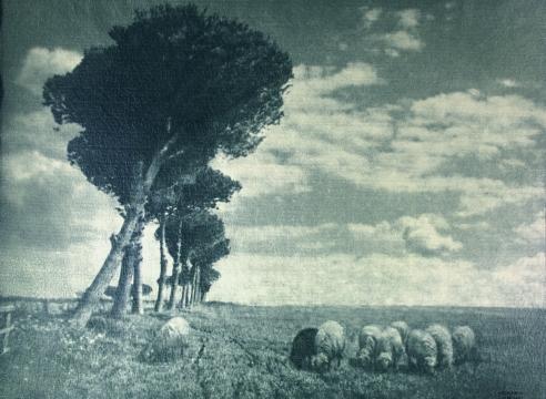 Heinrich Kuehn: Viennese Photo-Secessionist