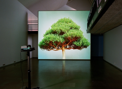Ceal Floyer   Tree Story