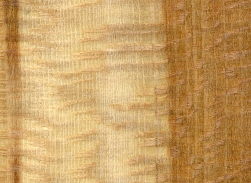 Wood Study, 2010