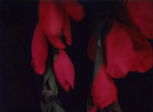 Red Flowers, 1980s