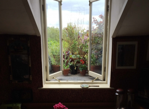 a view out a window onto lush foliage