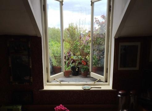 a view out a window onto lush foliage