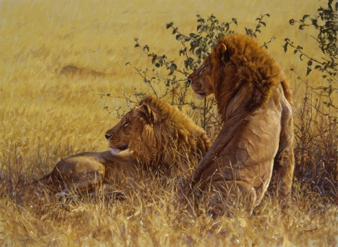 King of Beasts: A Study of the African Lion-Book Signing & Artist Talk