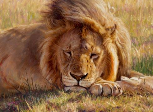 Dallas Safari Club Convention