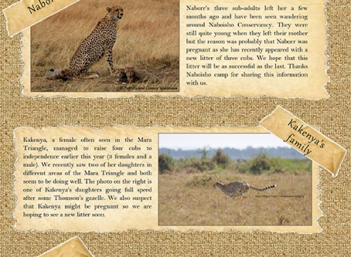 Mara Cheetah Project-Cheetah Chat: July-August 2016