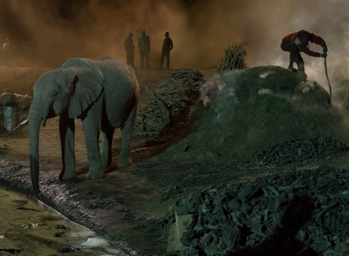 These Haunting Photos Capture The Vanishing Wildlife Of Africa