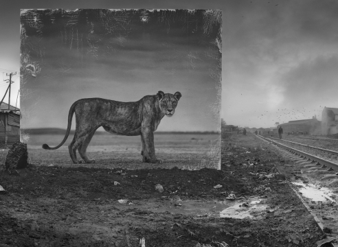 A Portrait of Lost Habitats in Africa