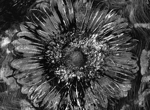 Abelardo Morell: Flowers for Lisa II at Edwynn Houk Gallery