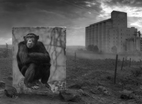 Nick Brandt: Inherit the Dust at Stockholm, Berlin and Paris