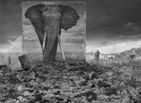 Inherit the Dust: Photographing 'the ghosts' of animals