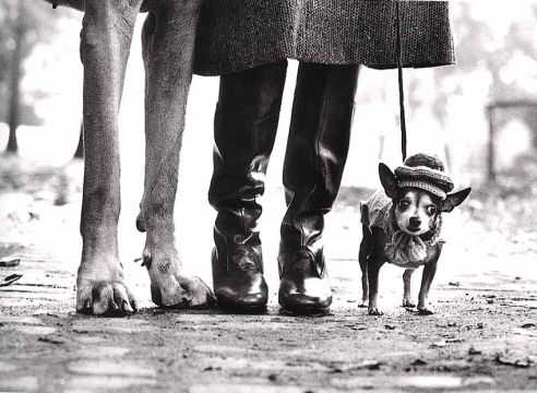 Elliott Erwitt: Pioneer of the Social Landscape Vintage Photographs 1950-1978