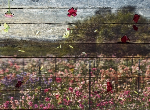 Abelardo Morell: Flowers for Lisa II