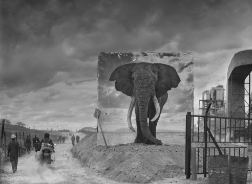 Haunting Photos of Endangered Animals in Their Ruined Habitats