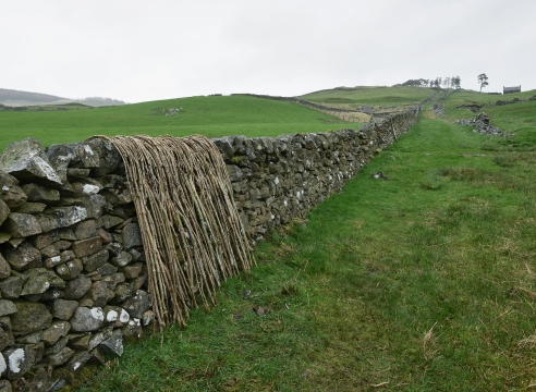 Frieze Viewing Room - Andy Goldsworthy
