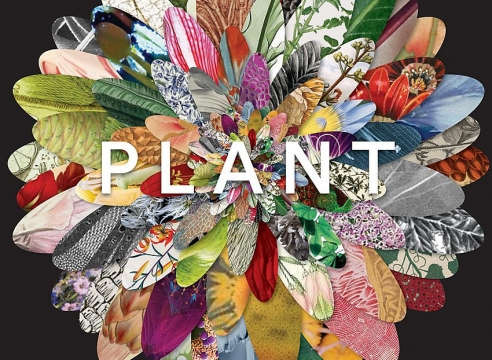Guo Hongwei: Plant: Exploring the Botanical World