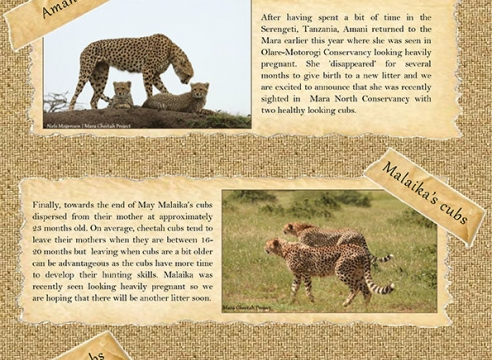 Mara Cheetah Project-Cheetah Chat: May-June 2016