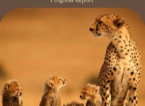 Kenya Wildlife Trust: Mara Cheetah Project - Our Work