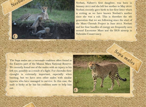 Mara Cheetah Project-Cheetah Chat: November-December 2017