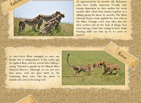 Mara Cheetah Project-Cheetah Chat: January-February 2016