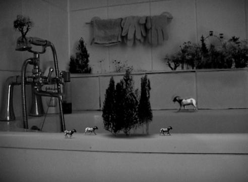 Hiraki Sawa at the Art Institute of Chicago