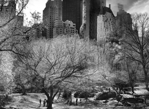 Central Park New York | 24 Solar Terms