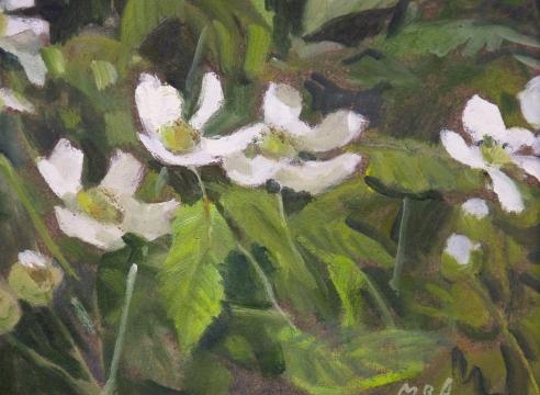 MEREDITH BROOKS ABBOTT, Blackberry Blossoms - Study, 2019