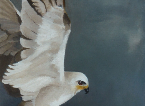 THEIL MORGAN , Black Shouldered Kite, 2020