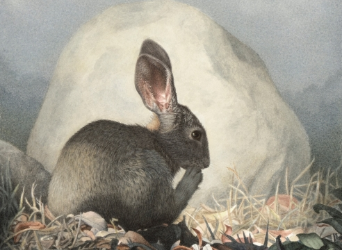 SUSAN MCDONNELL, Marsh Hare, 2019
