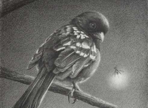SUSAN MCDONNELL, Towhee and Firefly, 2020