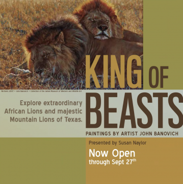 King of Beasts: A Study of the African Lion by John Banovich Opens at The Witte Museum