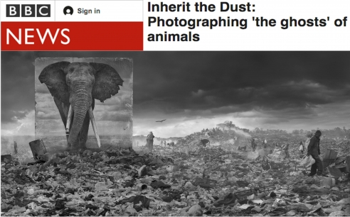Nick Brandt on BBC News