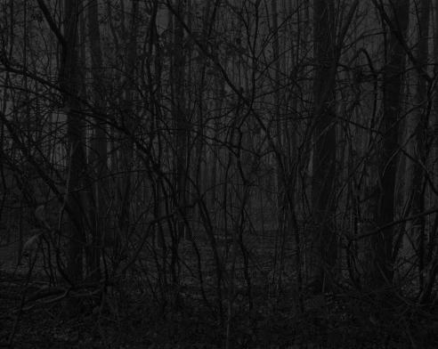 """Artificial night"": on Dawoud Bey's America"