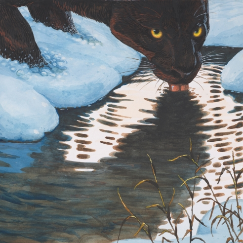 Mixed media painting on paper of a black panther drinking water in the Swiss Alps by Walton Ford